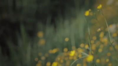 Гусли - Ольга Глазова NÕTR — Best Wishes For Summer
