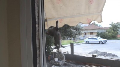 Как отключить котёнка