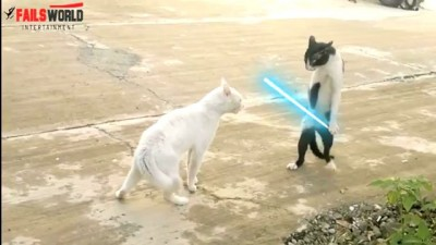 FAILS WORLD - Don't Mess With Jedi Cat aka Cobra Cat