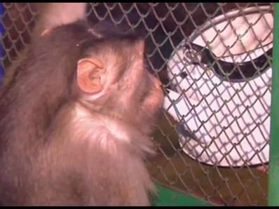 Обезьян в казахском зоопарке согревают глинтвейном