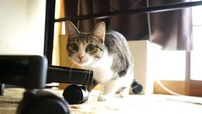 прыжок с размахом - Cat Wiggle Jump
