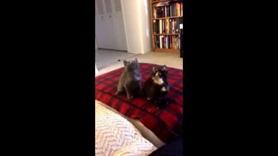 Котята качают под Лил Джона