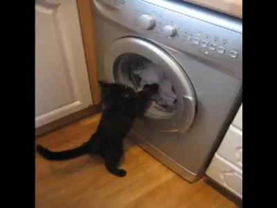 Котик стирает белье