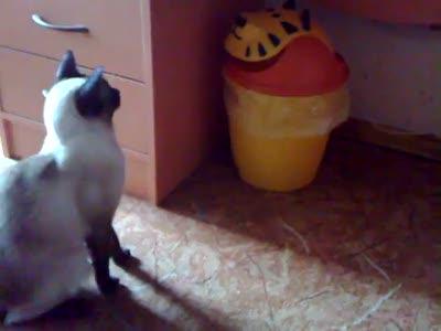Кот и мусорное ведро (продолжение)