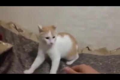 Что делать если кот сгрыз зарядку Лайфхак Lifehack