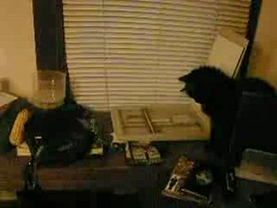 Кот и сканер