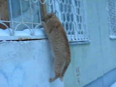 Одинокий кот-романтик
