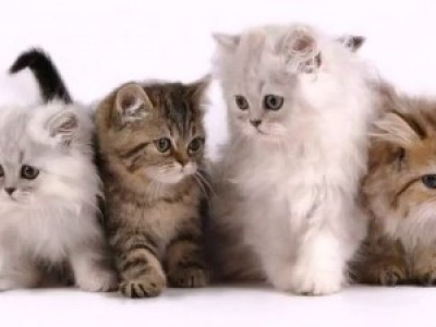 Интересные факты про кошачий язык. Телодвижения