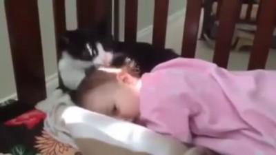 А вы бы разрешили так своему коту