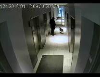 Бульдог против лифта