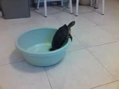 Черепаху накрыло