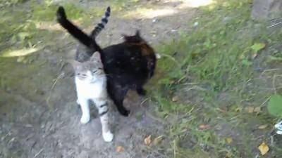 Коты просят кушать