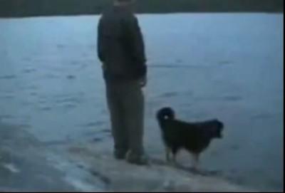 собака пинака