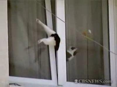 Мужик спас застрявшего в окне кота