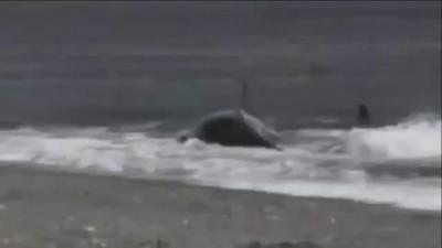 Orca Ест Парня, Перед Подругой