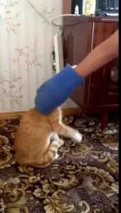 очень дикий и злой кот