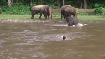 Слон спасает тонущего человека