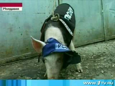 Новые работники Кишиневской полиции