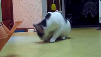 Трусливые коты