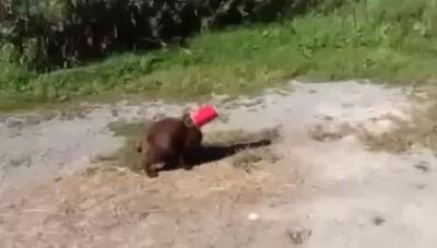 Пес спас кота.