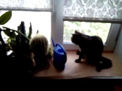 Кот пьет из лейки
