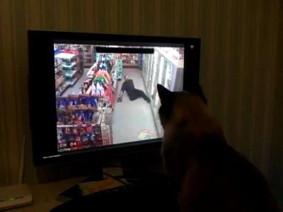 Наш кот сочувствует этому парню!