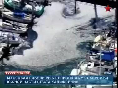 В Калифорнии на берег выбросилось около миллиона сардин