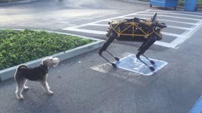 """собаке пришёлся не по нраву её механический собрат"""""""