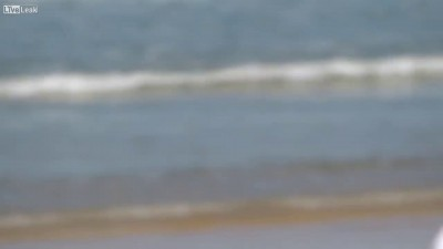 Собакен на пляже не дает скучать...