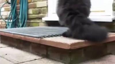 Не сдающийся потрясающий кот!