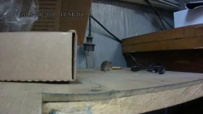 Мышь и печенька