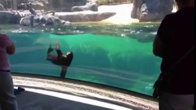 Морской лев и маленькая девочка