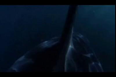 Болбшая белая акула Красотища!