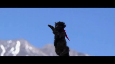 Летающие котята. Flying Kittens