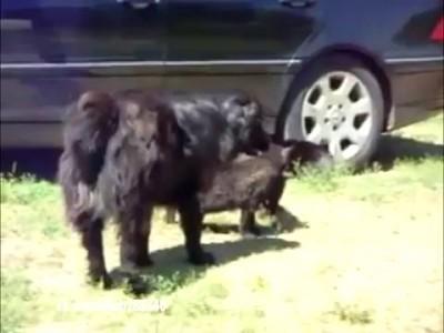Собаки - котов разнимаки! ^_^