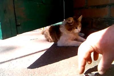 Кот и рогач