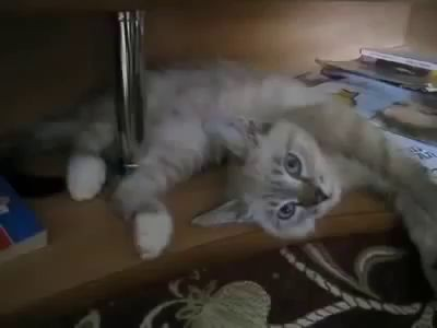 Кота парализовало