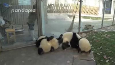 Борьба с пандами
