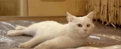 Песенка о коте