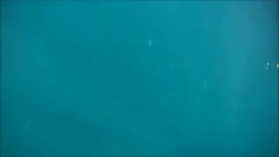 Акула и рыболов