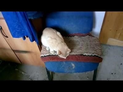 выживание кота зимой в неотапливаемом сарае