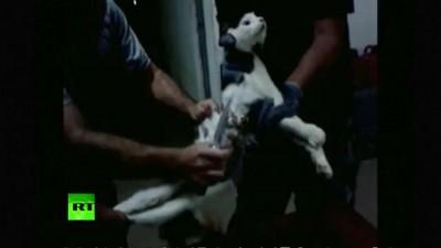 Кошку-курьера поймали в бразильской тюрьме