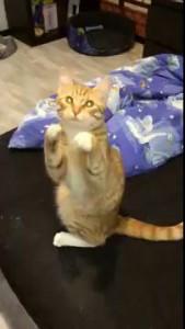 Кот молится
