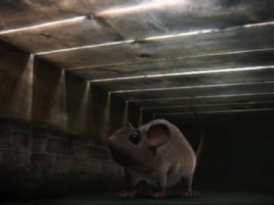 30 секунд борьбы мультяшной мышки и мощного пылесоса: кто кого?