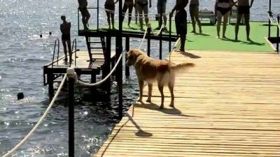 Собака в Море ныряка