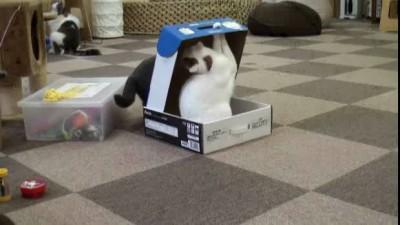 Упаковали кота