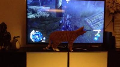 Кот в замешательстве