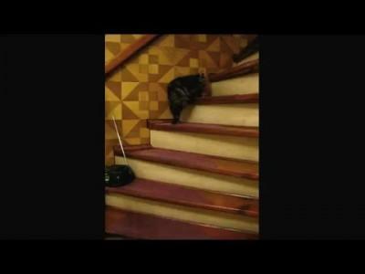 Кошак и винтовая лестница