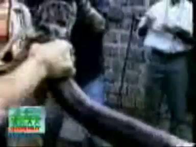Boa swallowed hippo! Удав проглотил бегемота!