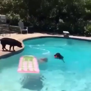 DOG JUMPING ON GIRL IN SWIMMING POOL | FUNNY ANIMAL VIDEOS !!